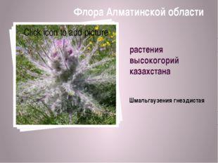 растения высокогорий казахстана Шмальгaузения гнездистая Флора Алматинской об