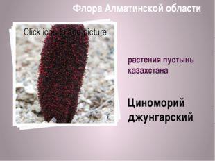 растения пустынь казахстана Циноморий джунгарский Флора Алматинской области