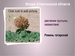 растения пустынь казахстана Ревень татарский Флора Алматинской области