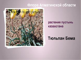 растения пустынь казахстана Тюльпан Бема Флора Алматинской области