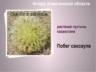 растения пустынь казахстана Побег саксаула Флора Алматинской области