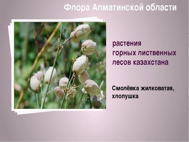 растения горных лиственных лесов казахстана Смолёвка жилковатая, хлопушка Фло...