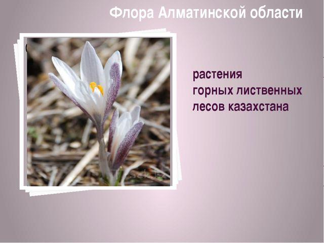 растения горных лиственных лесов казахстана Флора Алматинской области