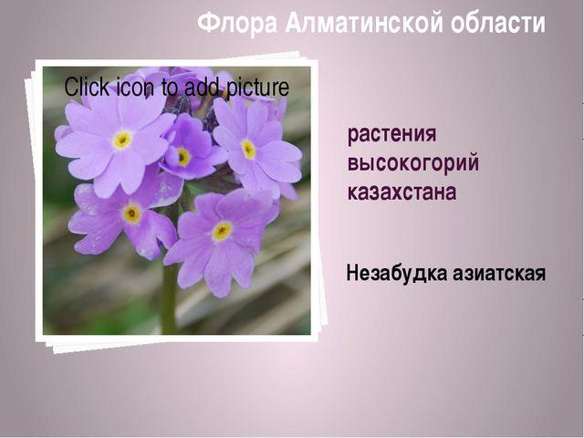 растения высокогорий казахстана Незабудка азиатская Флора Алматинской области