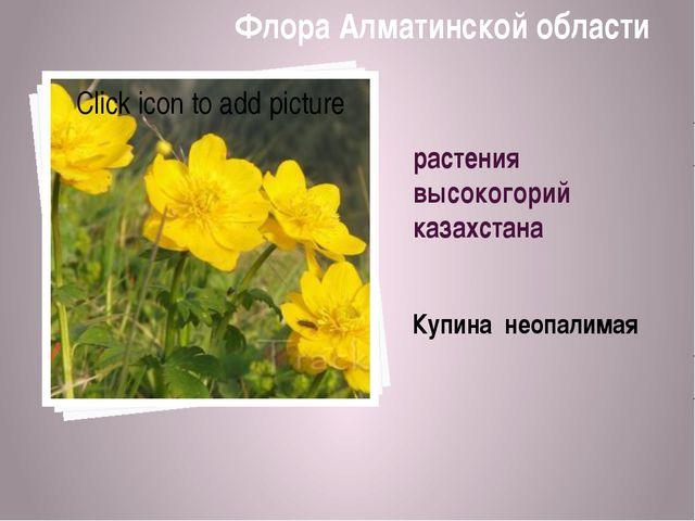 растения высокогорий казахстана Купина неопалимая Флора Алматинской области