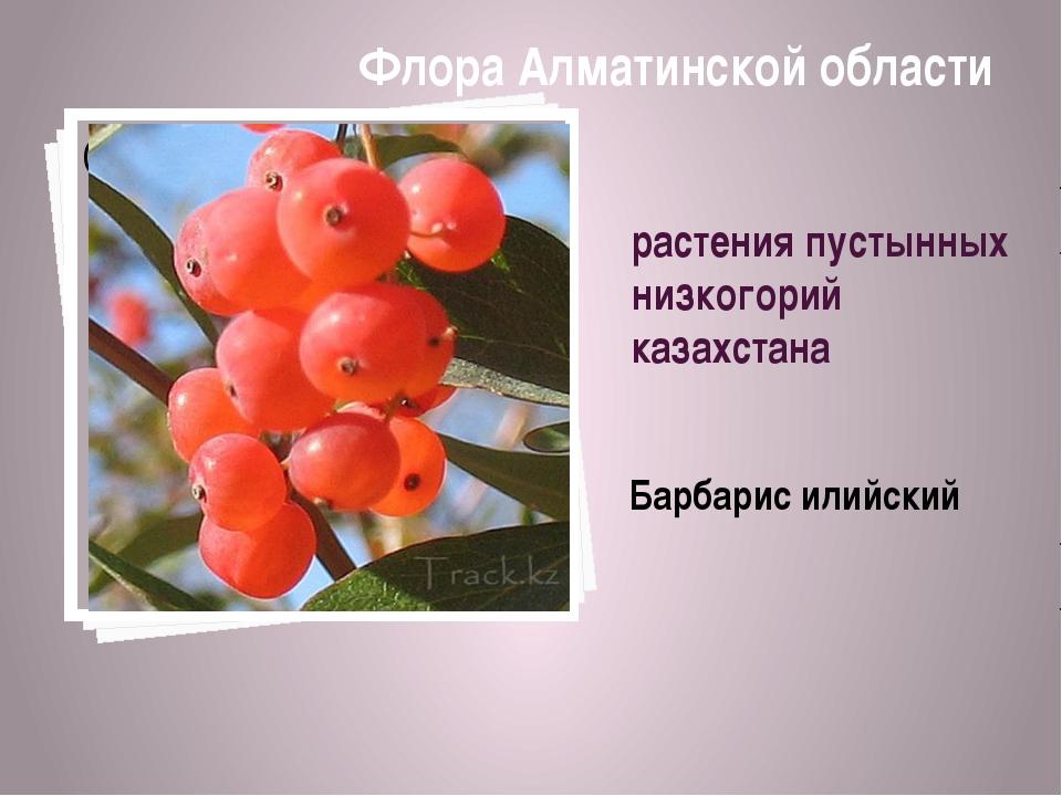 растения пустынных низкогорий казахстана Барбарис илийский Флора Алматинской...