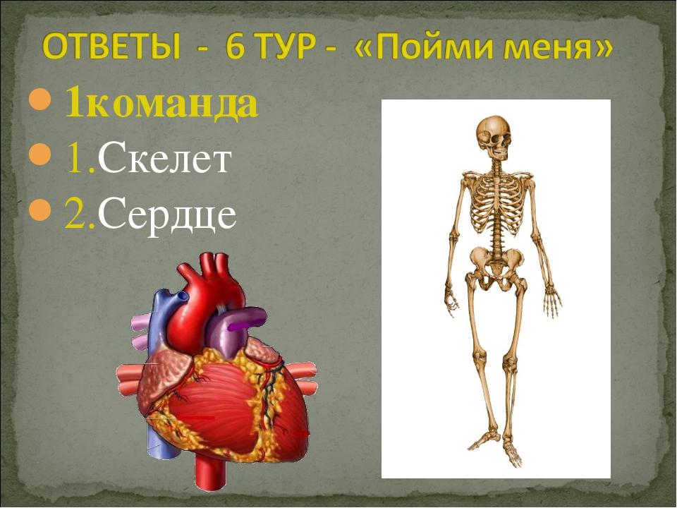 1команда 1.Скелет 2.Сердце