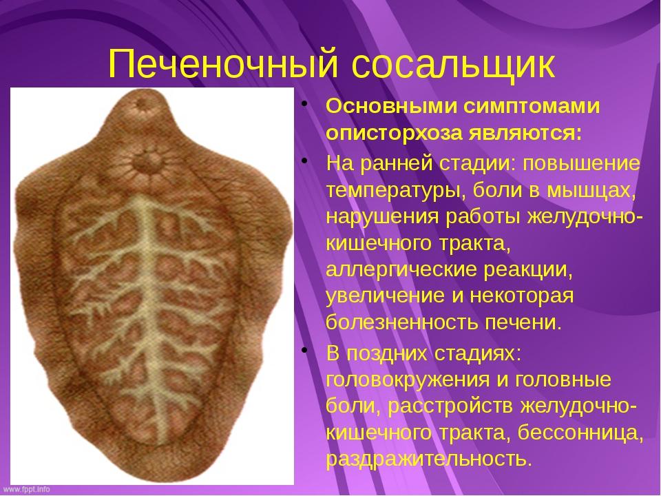 Печеночный сосальщик Основными симптомами описторхоза являются: На ранней ста...