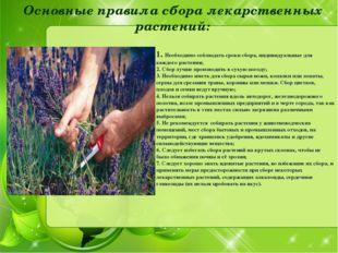 Необходимо соблюдать сроки сбора, индивидуальные для каждого растения; 2. Сб