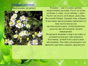Ромашка аптечная (Matricaria recutita) Ромашка – одно из самых древних лекарс