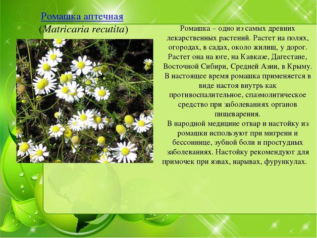 Ромашка аптечная (Matricaria recutita) Ромашка – одно из самых древних лекарс...