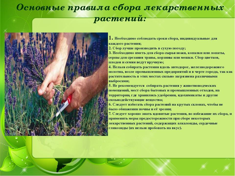 Необходимо соблюдать сроки сбора, индивидуальные для каждого растения; 2. Сб...