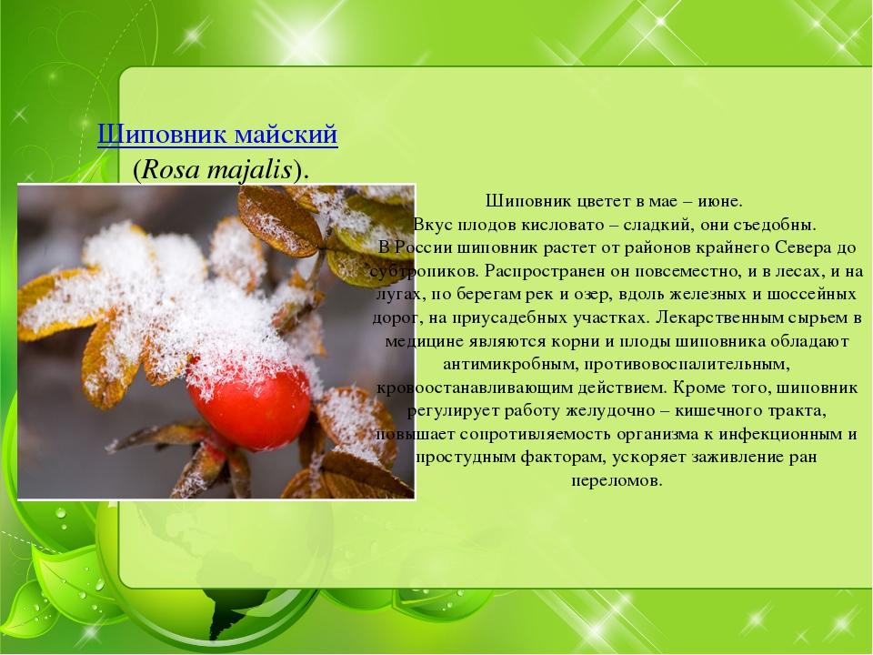 Шиповник майский (Rosa majalis). Шиповник цветет в мае – июне. Вкус плодов ки...
