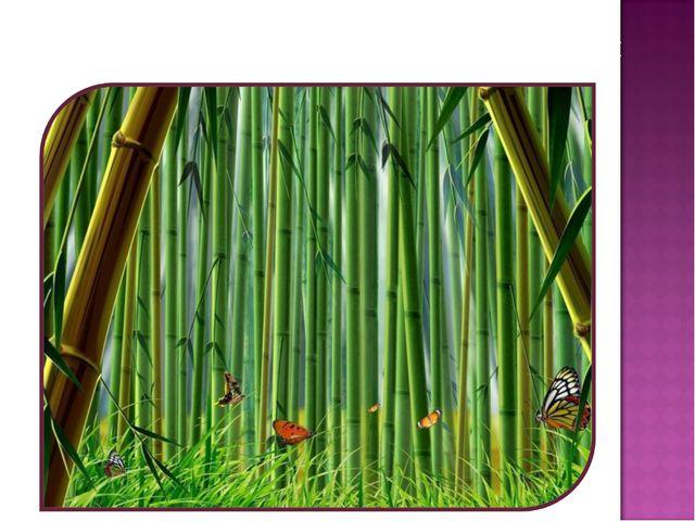 Бамбук – это трава, хотя и очень прочная