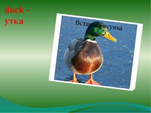 duck - утка