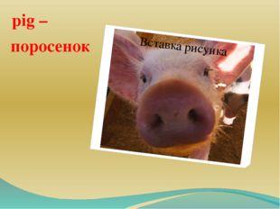 pig – поросенок