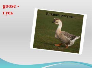 goose - гусь