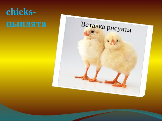 chicks- цыплята