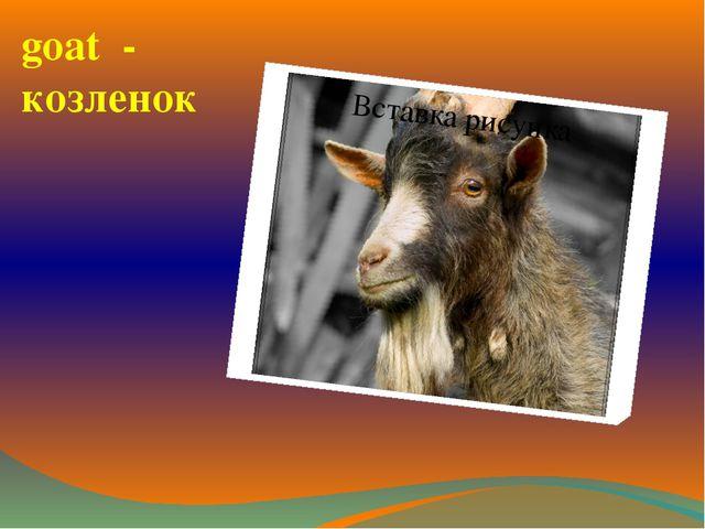 goat - козленок