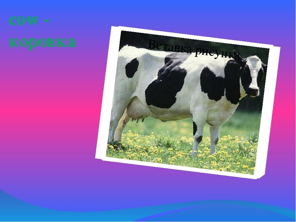 сow - коровка