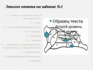 Эталон ответа на задание №1 1 — лопатка: а - плечевая часть, б -заплечная час