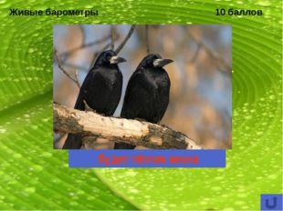 Охраняемые природные территории 10 баллов Единственный государственный природ
