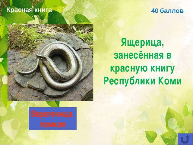 40 баллов Ящерица, занесённая в красную книгу Республики Коми Веретеница ломк...