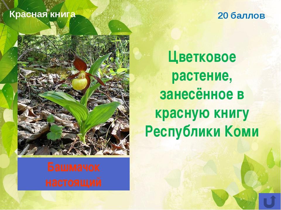 20 баллов Цветковое растение, занесённое в красную книгу Республики Коми Башм...