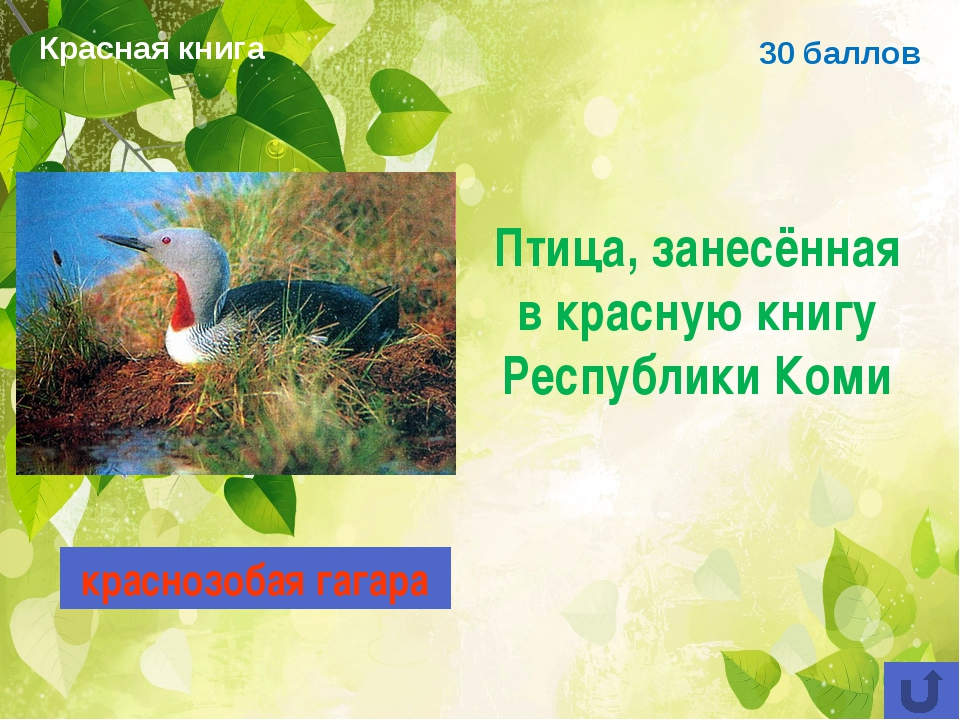 30 баллов Птица, занесённая в красную книгу Республики Коми краснозобая гагар...