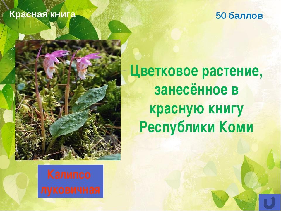 50 баллов Цветковое растение, занесённое в красную книгу Республики Коми Кали...