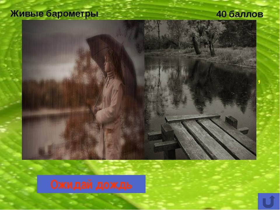 Охраняемые природные территории 40 баллов Печоро-Илычский заповедник – единст...