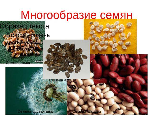 Многообразие семян Семена одуванчика Семена льна Семена арбуза Семена томатов...