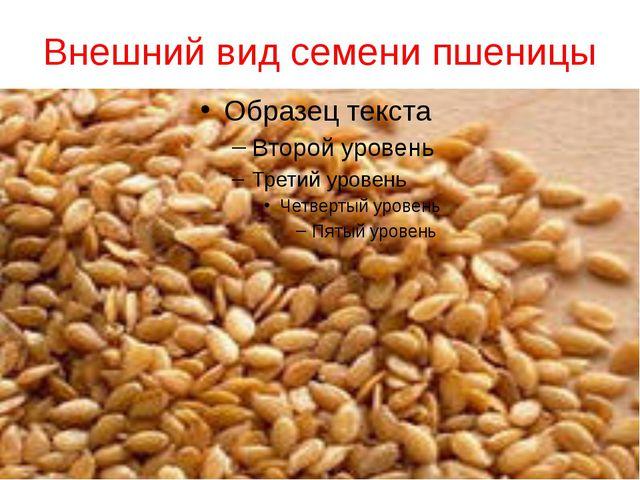 Внешний вид семени пшеницы