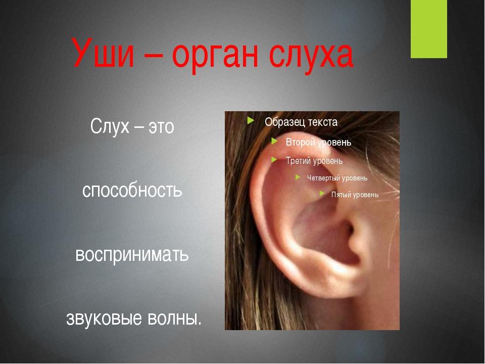 Уши – орган слуха Слух – это способность воспринимать звуковые волны.