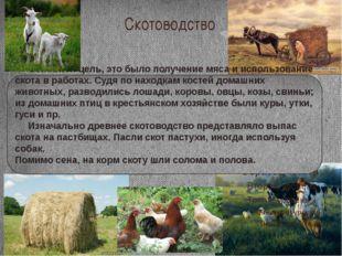 Скотоводство Основной цель, это было получение мяса и использование скота в р