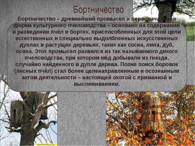 Бортничество Бортничество – древнейший промысел и первоначальная форма культу...