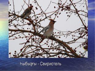 Һыбыҙғы - Свиристель