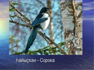 Һайыҫҡан - Сорока