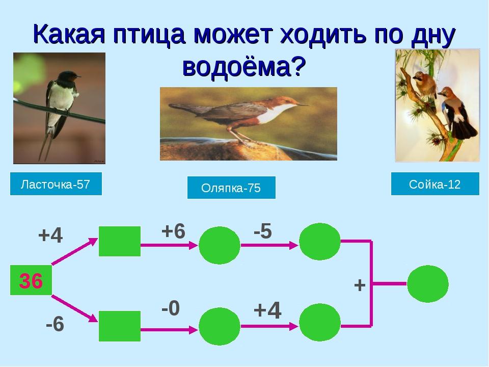 Какая птица может ходить по дну водоёма? Ласточка-57 Оляпка-75 Сойка-12 36 +4...