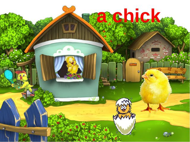 a chick