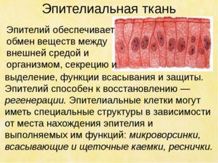 Эпителиальная ткань выделение, функции всасывания и защиты. Эпителий способен