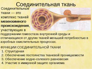 Соединительная ткань поддержании гомеостаза внутренней среды и отличающихся о