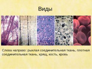 Виды Слева направо: рыхлая соединительная ткань, плотная соединительная ткань