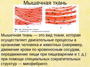 Мышечная ткань Мышечная ткань — это вид ткани, которая осуществляет двигатель
