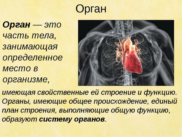 Орган имеющая свойственные ей строение и функцию. Органы, имеющие общее проис...