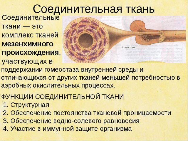 Соединительная ткань поддержании гомеостаза внутренней среды и отличающихся о...