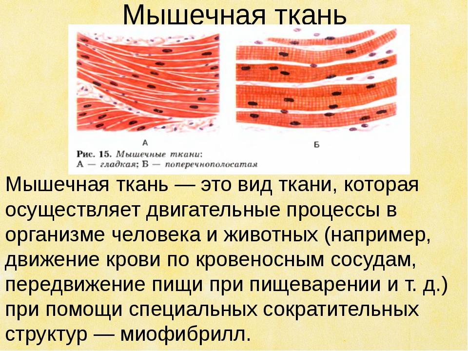 Мышечная ткань Мышечная ткань — это вид ткани, которая осуществляет двигатель...