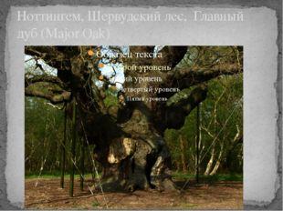 Ноттингем, Шервудский лес, Главный дуб (Major Oak)