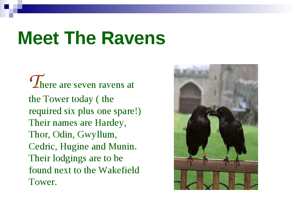 Meet The Ravens There are seven ravens at the Tower today ( the required six...