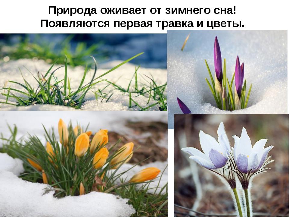 Природа оживает от зимнего сна! Появляются первая травка и цветы.
